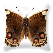 Butterfly Species Junonia Orithya  Throw Pillow