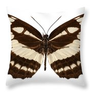 Butterfly Species Neptis Hylas  Throw Pillow