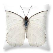 Butterfly Species Pieris Rapae Throw Pillow