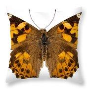 Butterfly Species Vanessa Cardui  Throw Pillow