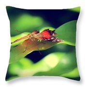 Butterfly Taking The High Ground Throw Pillow