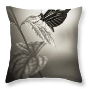 Butterfly Warm Black And White Throw Pillow