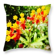 Butterfly Weed 2 Throw Pillow