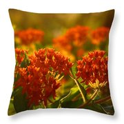 Butterfly Weed In The Sunset Throw Pillow