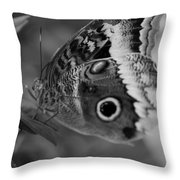 Butterfly5 Throw Pillow