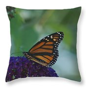 Butterflybush Throw Pillow