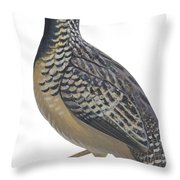 Button Quail Throw Pillow by Anonymous