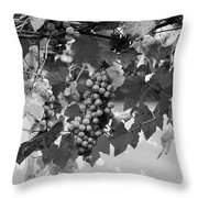 Bw Hanging Thompson Grapes Sultana Poster Look Throw Pillow