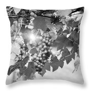 Bw Lens Flare Hanging Thompson Grapes Sultana Throw Pillow