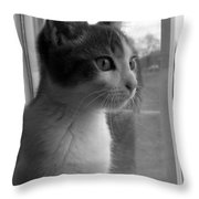 Bw The Inquisitive Kitty Jackson Throw Pillow