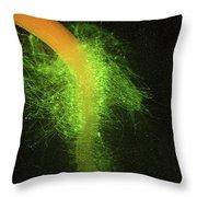 C0015093 - Listeria Bacteria Lm Throw Pillow