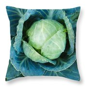 Cabbage Painterly Throw Pillow