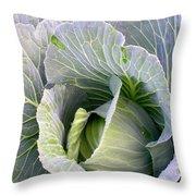 Cabbage Still Life Throw Pillow