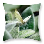 Cabbage White Butterfly In Flight Throw Pillow