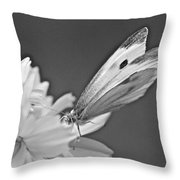 Cabbage White Butterfly On Cosmos - Black And White Throw Pillow