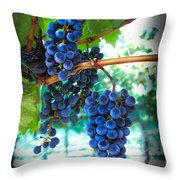 Cabernet Sauvignon Grapes Throw Pillow by Robert Bales