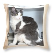 Cabinet Cat Throw Pillow