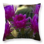 Cacti Flower Bouquet  Throw Pillow