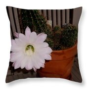 Cactus Flower In Bloom Throw Pillow