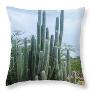 Cactus In Aruba Throw Pillow