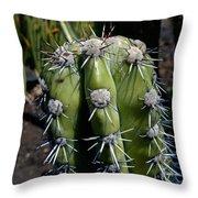 Cactus In Hawaii Throw Pillow