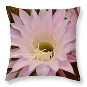Cactus In The Backyard Throw Pillow