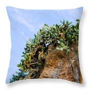 Cactus On A Cliff Throw Pillow