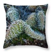 Cactus Plant 1 Throw Pillow