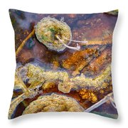 Cafe Au Lait Hot Springs Throw Pillow