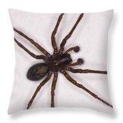 Caffeine Crazed Arachnoid Throw Pillow