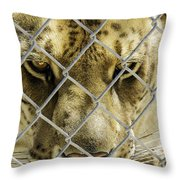 Caged Liger Throw Pillow
