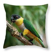 Caique A Tete Noire Pionites Throw Pillow
