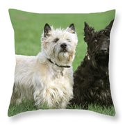 Cairn Terrier And Scottish Terrier Throw Pillow