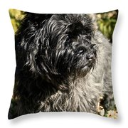 Cairn Terrier Portrait Throw Pillow