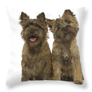 Cairn Terriers Throw Pillow