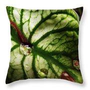 Caladium Leaf After Rain Throw Pillow