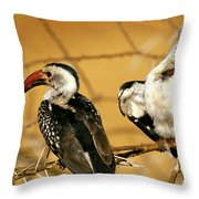 Calao A Bec Rouge Tockus Erythrorhynchus Throw Pillow