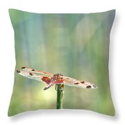 Calico Pennant From Above Throw Pillow