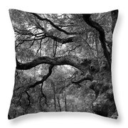 California Black Oak Tree Throw Pillow