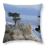 California Bonsai Throw Pillow