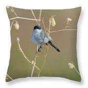 California Gnatcatcher Throw Pillow