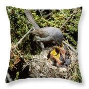 California Gnatcatcher Feeding Young Throw Pillow