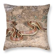 California Kingsnake Throw Pillow