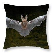 California Leaf-nosed Bat Throw Pillow