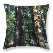 California Redwood Throw Pillow
