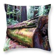 California Redwoods 2 Throw Pillow