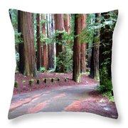 California Redwoods 3 Throw Pillow