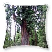 California Redwoods 6 Throw Pillow