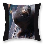 California Sea Lion Throw Pillow