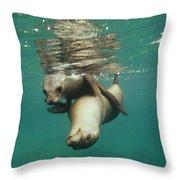 California Sea Lions Playing Sea Throw Pillow